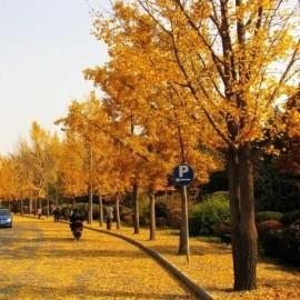Yuxin Wu