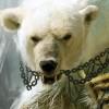 jiri.medved